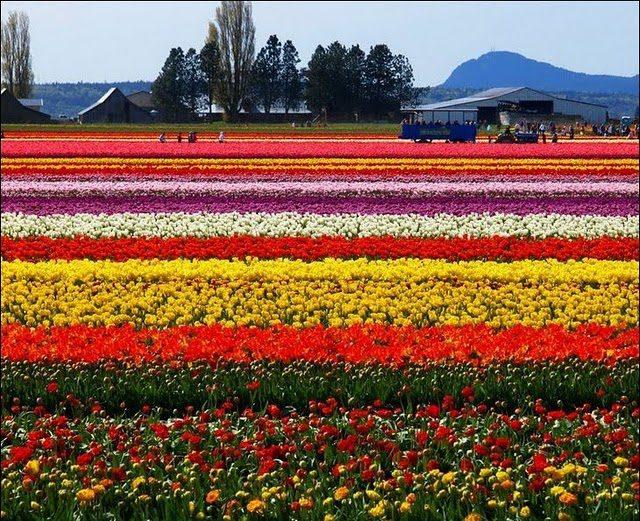Holanda.jpg-525ebdae3f360