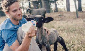 Já pensou em voluntariar em fazendas orgânicas?