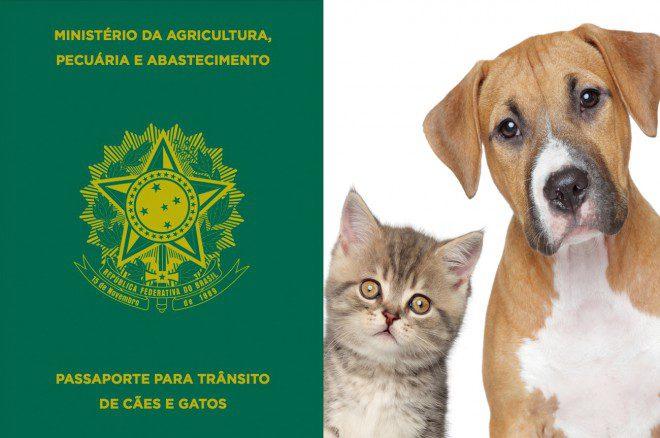 Transporte internacional de animais exige documentação específica Reprodução: Cia dos Animais