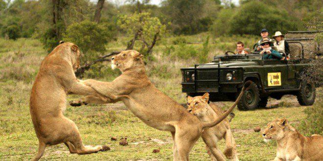 Wetu.com - Lions_MalaMala