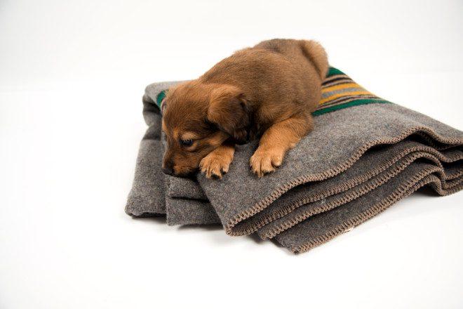 Você vai se sentir muito mais carente. Foto: Shutterstock