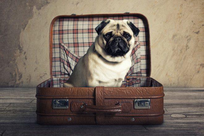Esteja pronto para o desafio de conviver. Créditos: Shutterstock.
