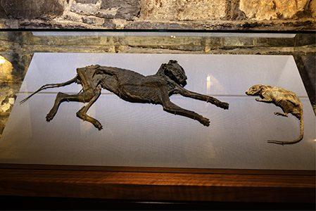 Chamados de 'Tom e Jerry', essas múmias podem ser vistas na Christ Church. Reprodução Christchurchcathedral.ie