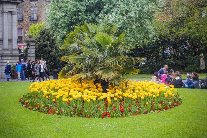 A cidade é repleta de parques, como o St. Stephen Green. Crédito: Teodor Lazarev | Dreamstime.com