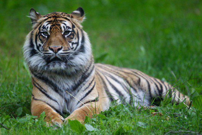 Foto: Dublin Zoo