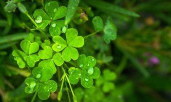 8 curiosidades e invenções irlandesas que muitos desconhecem