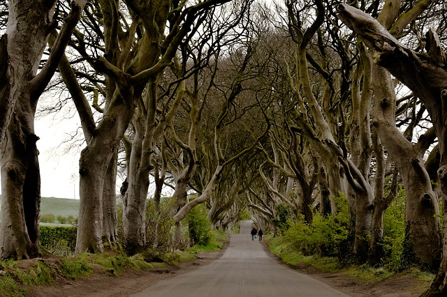 Dark Hedges. Foto: Pixabay