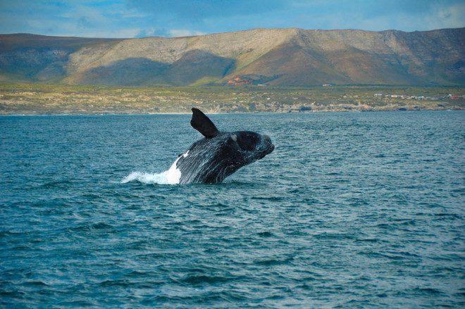 It is whale watching season in Ireland. Image: Holger Karius | Dreamstime