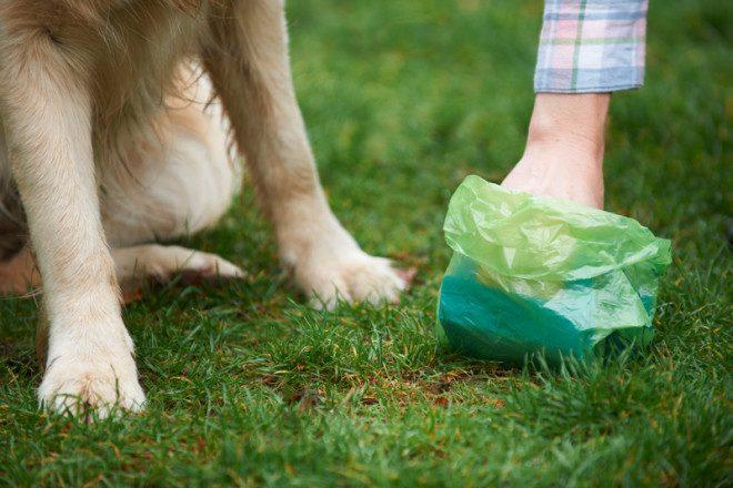 Deixar o cocô do pet nas ruas pode gerar multa. Foto: Ian Allenden/Dreamstime