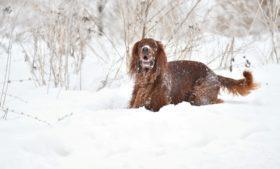 Leis rigorosas controlam número de cães na Irlanda