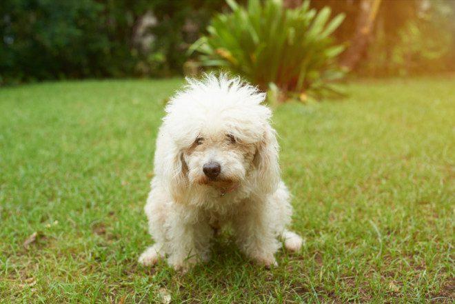 Deixar o cocô do cachorrinho nas áreas públicas pode render multa de 150 euros. Foto: Dimarik16/Dreamstime