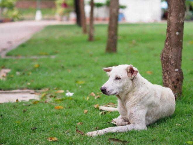 Cães encontrados na rua sem dono podem ser sacrificados após cinco dias sem ninguém reclamar a perda. Foto: Nattapol Jitonnom/Dreamstime