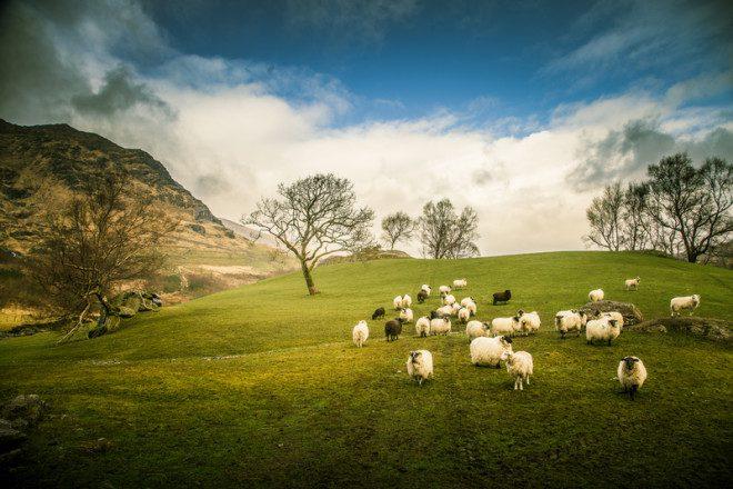 Os cenários encantadores do interior da Irlanda na Primavera. Foto: Dachux21 | Dreamstime