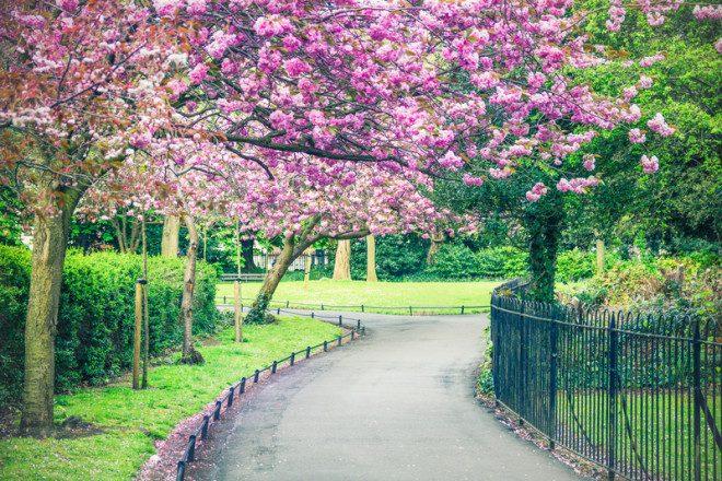 Caminhar pelos parques de Dublin no fim da tarde torna-se mais agradável na primavera. Foto: Giancarlo Liguori | Dreamstime
