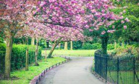 5 razões para chegar à Irlanda na primavera