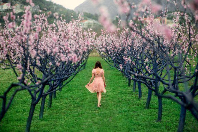 springdreamstime_s_53374403