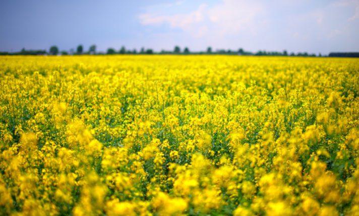 Já conferiu os campos floridos de Greystones?