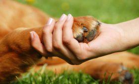 Pet sitter e dog walker: como trabalhar de babá de cães e gatos na Irlanda