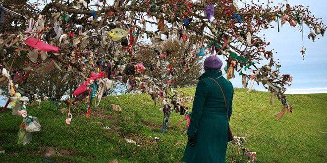 Jardim Botânico realiza tour especial no mês de São Patrício. Foto: Dublin