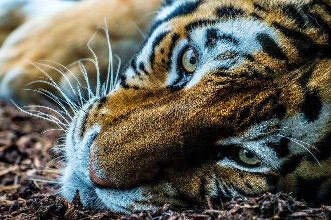 Dublin Zoo terá evento especial para o público infantil. Foto: Mareticd | Dreamstime