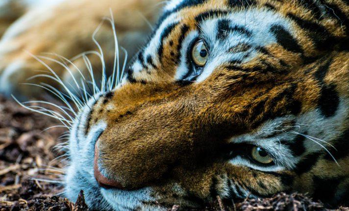 Zoológico e petshop procuram cuidadores de animais em Dublin