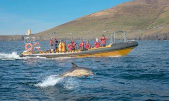 5 lugares para ver golfinhos na Irlanda