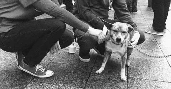 Veterinários voluntários cuidam de pets de sem-tetos em Dublin
