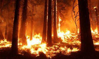 Incêndio na Amazônia é destaque na imprensa irlandesa