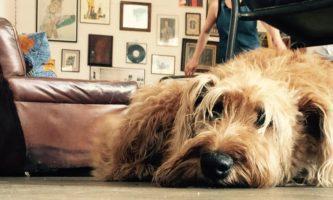 8 cafés dog friendly para você curtir em Dublin