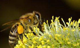 Para salvar abelhas, Dublin poderá ter pontos de ônibus ecológicos