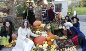 Halloween no Dublin Botanic Gardens tem exposição de abóboras