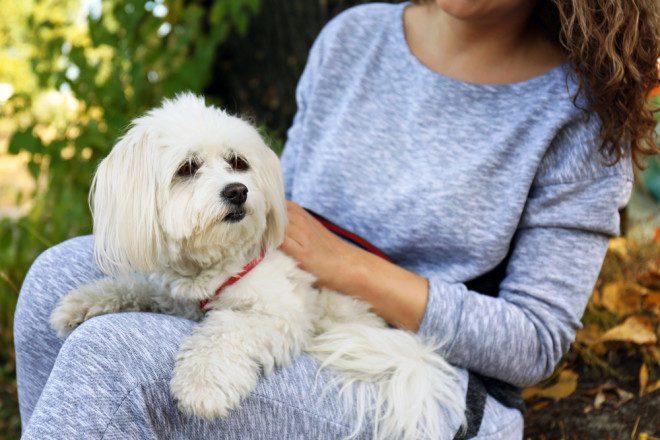 Agora você pode desfrutar dos momentos agradáveis no pub com seu dog. Foto: Depositphotos