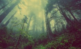 Irlanda plantará 440 milhões de árvores para combater as mudanças climáticas