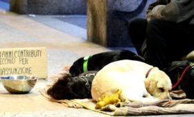 Polícia apreende cães sedados nas ruas de Dublin