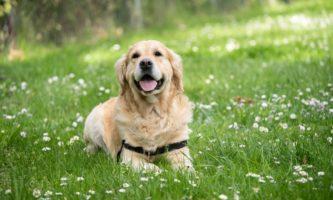 Quanto custa manter um cachorro na Irlanda?