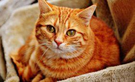 Feira de gatos acontece em Dublin no domingo