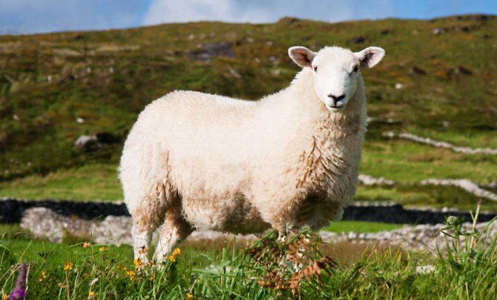 Turismo na Irlanda – Ring of Kerry – E-Dublincast (Ep. 42)