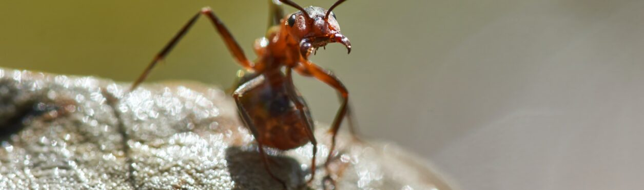 Nuvem gigante de formigas deve chegar à Irlanda nas próximas semanas