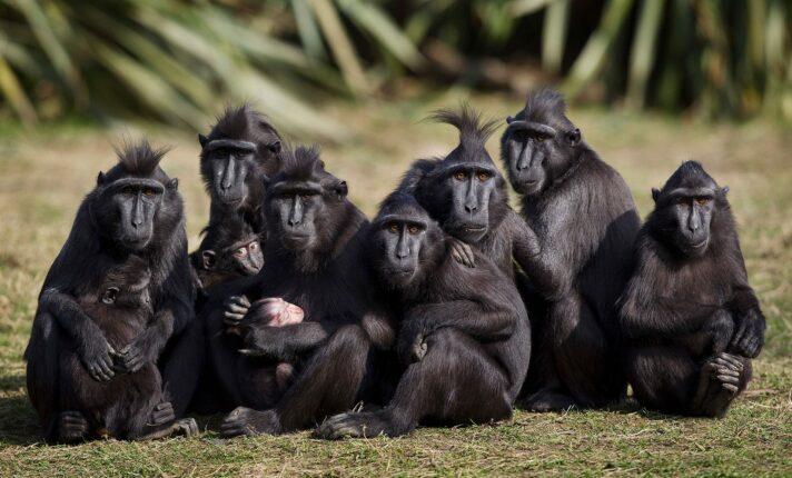 Zoológico de Dublin pede socorro em meio à pandemia