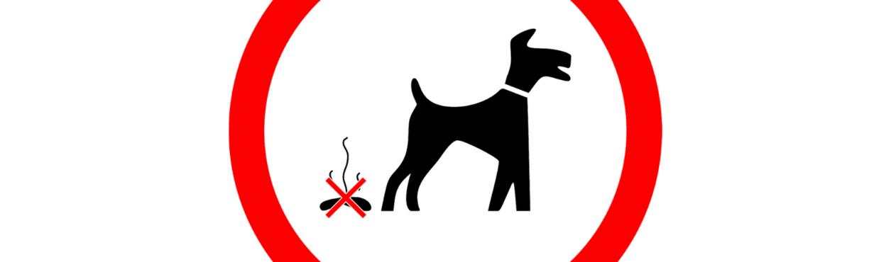Condado na Irlanda vai analisar DNA de fezes caninas para multar donos